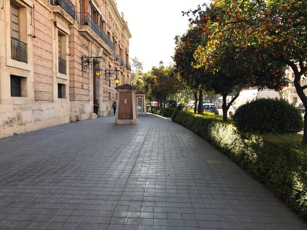 travel to see Spain orange trees